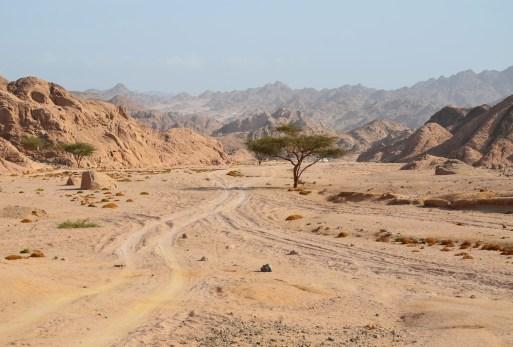 Desert safari in Sinai, Egypt