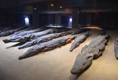 Crocodile Museum at Kom Ombo, Egypt