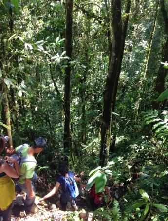 A steep downhill climb at Parque Municipal Natural Santa Emilia, Belén de Umbría, Risaralda, Colombia