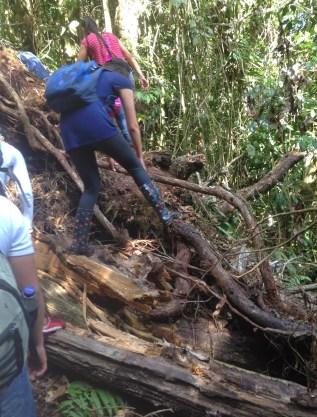 Maneuvering over fallen trees at Parque Municipal Natural Santa Emilia, Belén de Umbría, Risaralda, Colombia
