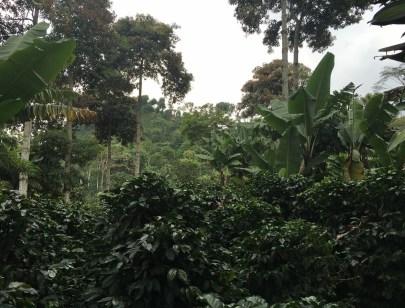 Finca El Ocaso near Salento, Quindío, Colombia