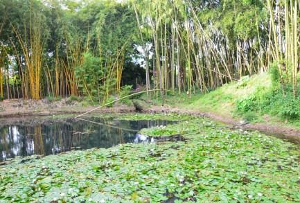 Pond at Parque Lago de la Pradera in Dosquebradas, Risaralda, Colombia