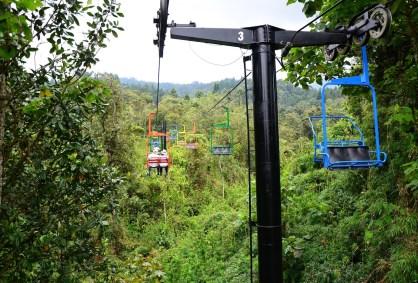 Telesilla at Recinto del Pensamiento in Manizales, Caldas, Colombia