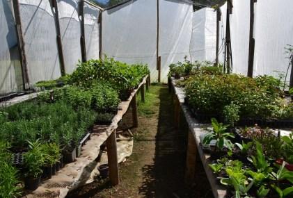 Herb garden at Parque Nacional de la Uva La Unión Valle del Cauca Colombia