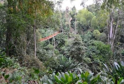 Nature Walk at Quindío Botanical Garden