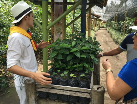 Recuca coffee education trail