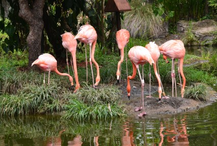 Flamingos at Zoológico de Cali in Colombia