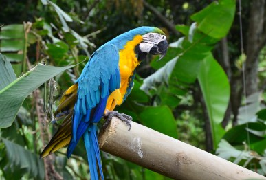 Macaw at Zoológico de Cali in Colombia