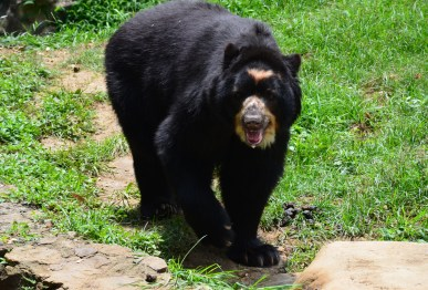 Bear at Zoológico de Cali in Colombia