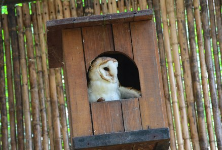 Owl at Zoológico de Cali in Colombia