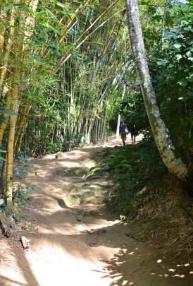 The trail to Praia Lopes Mendes on Ilha Grande, Brazil