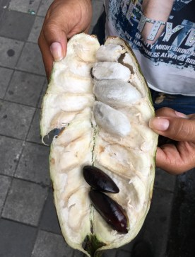 Guama Fruit in Colombia