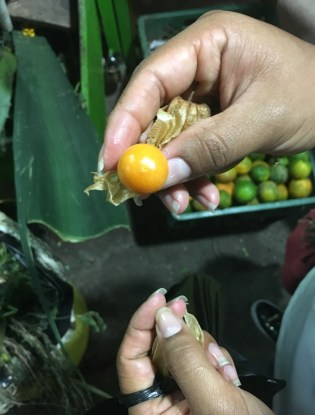 Uchuva Fruit in Colombia