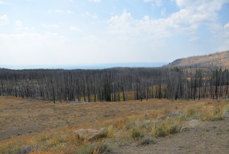 Forest fire aftermath in Yellowstone National Park