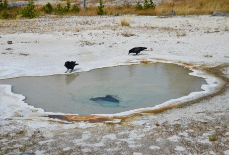 Pendant Spring on Geyser Hill at the Upper Geyser Basin in Yellowstone National Park, Wyoming