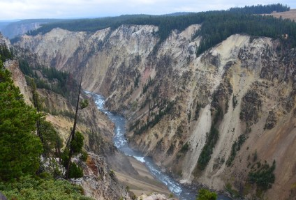 Grand Canyon at Brink of Upper Falls at Grand Canyon of the Yellowstone in Yellowstone National Park, Wyoming