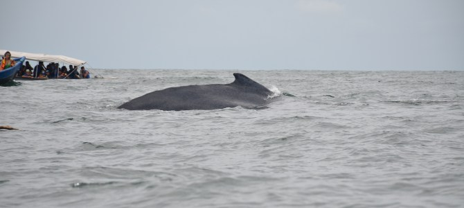 Whale Watching in Colombia