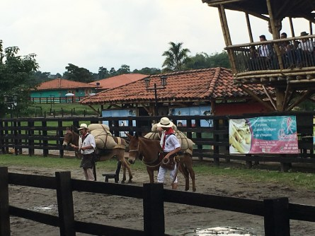 Arriero demonstration at Parque Los Arrieros in Quimbaya, Quindío, Colombia