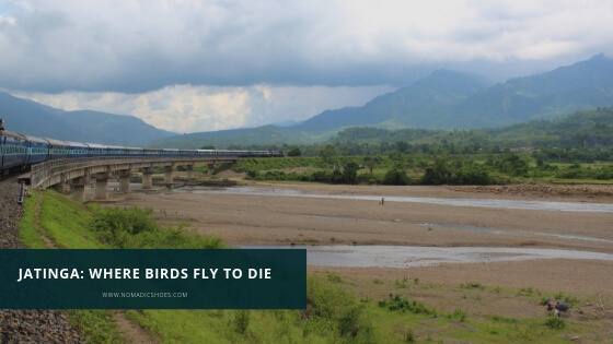 Jatinga in Assam – where birds fly to die!