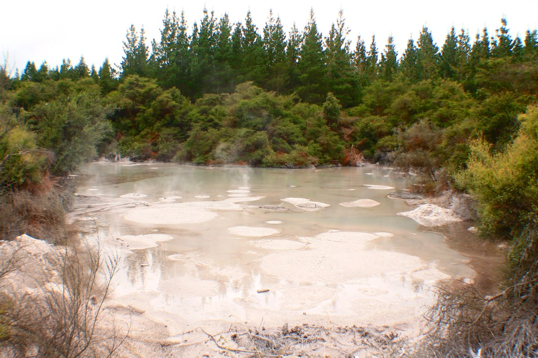 Mud pools by Rotorua, 3 week New Zealand Itinerary