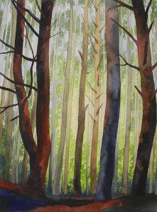 Light Through Temperate Woods, Washington