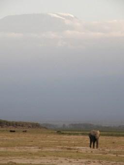 Kilimanjaro (from the north)