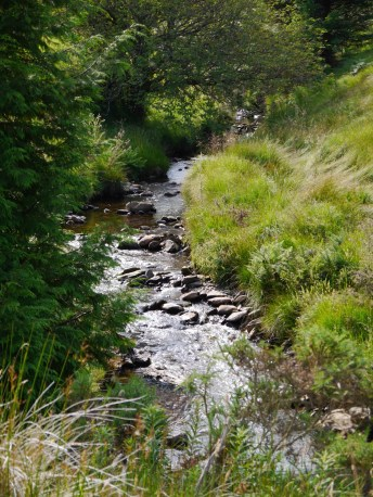 Cool s a mountain stream