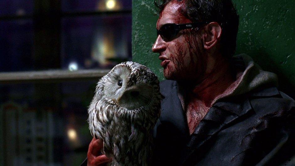 Night Watch Owl