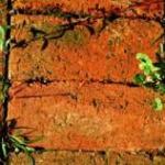 brick weeds