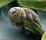 tardigrade_eyeofscience_960