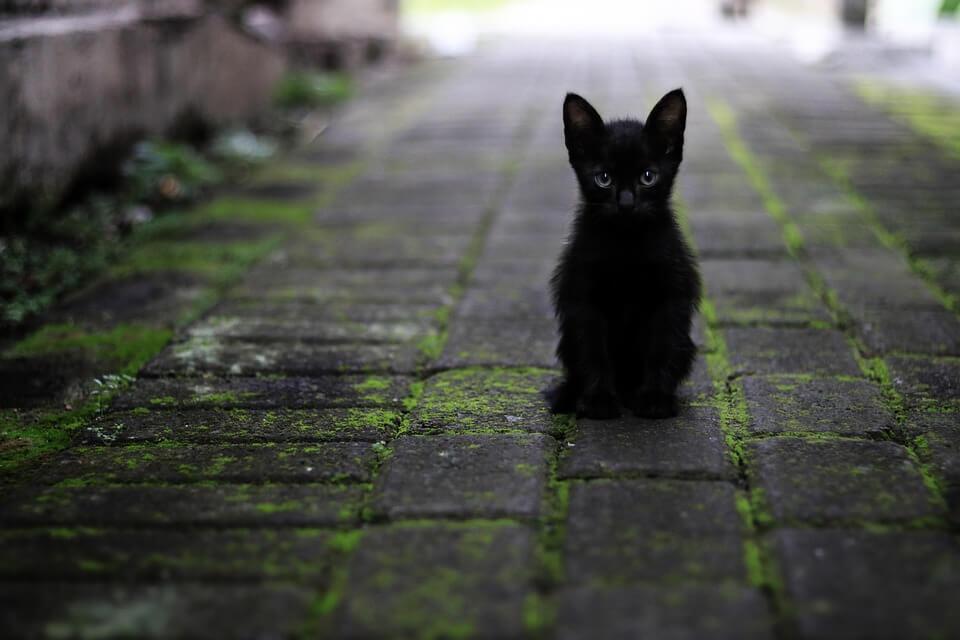 Cute Kitten Wallpaper Free Nombres Para Gatos Negros 【 Cortos Y Originales 】 183 2019