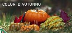 offerte alitalia,alitalia offre voli a prezzi scontati,vacanze e shopping,promo alitalia