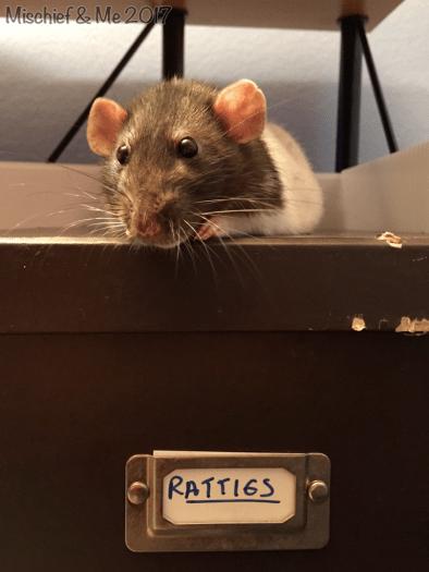 guarding the snacks