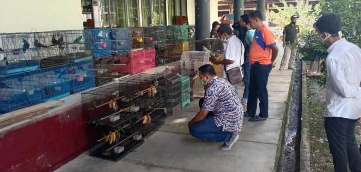Penjualan Satwa Dilindungi secara Online di Samarinda Dibongkar