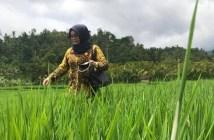 Wakil Rakyat Mahulu Setuju Pembangunan Pertanian di 50 Kampung