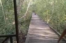 Terdakwa Korupsi Jembatan Mangrove di PPU Dituntut 1,5 Tahun