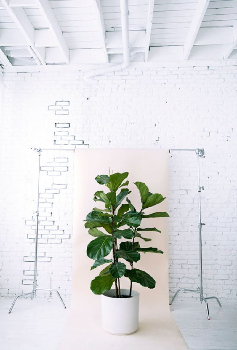 gif-tree-home-plants