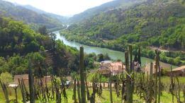 Vista do Miño desde a Ferreirúa