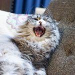 *猫の突発性攻撃行動*知ってますか?