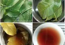 5 Health Benefits Of Guava Leaves You Should Know