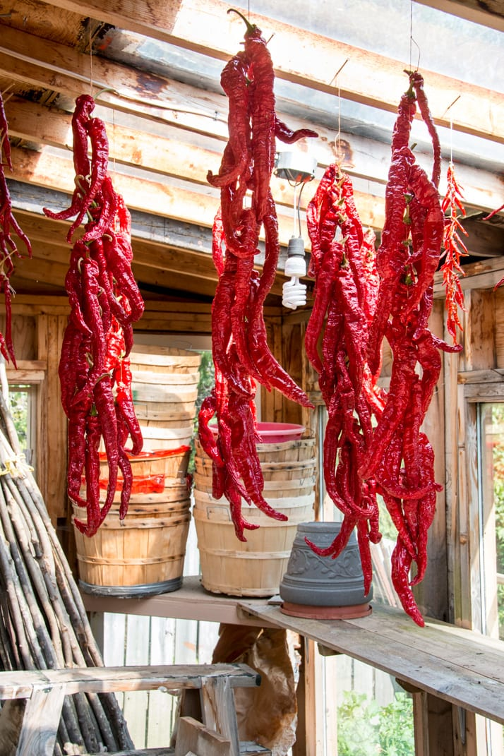 hanging-peppers-to-dry