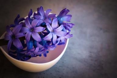 hyacinth-1403653_1280