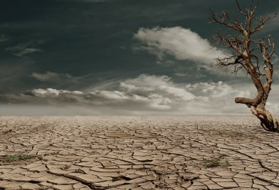desert-279862_1280