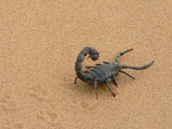 giant-scorpion-1076314_960_720