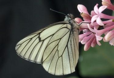 butterfly-1716535_1280