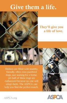 adopt_a_shelter_dog_poster_by_strange_1-d33e0fm