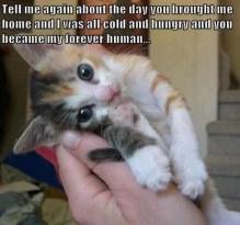 Cat.Adoption-tell-me-story