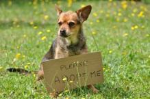 message du chien