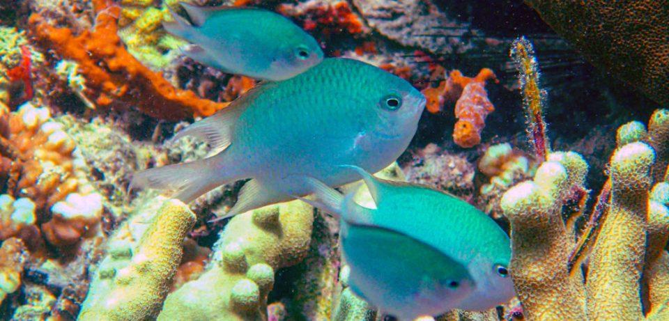 Biodiversità nei mari, c'è l'impegno del Ministero dell'Ambiente, con la nascita delle Zea: le Zone economiche ambientali,