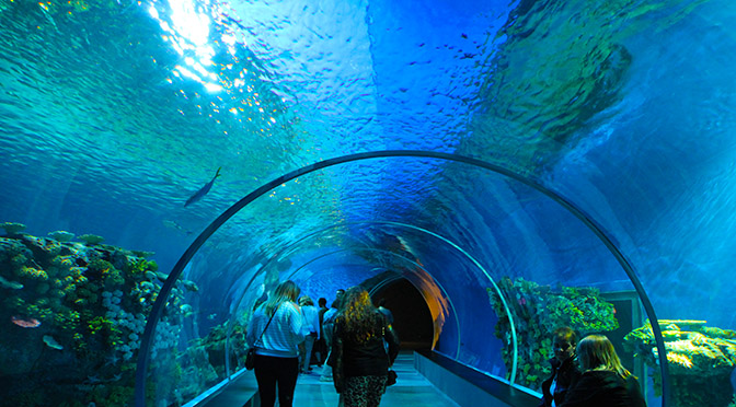 L'Oceanário di Lisbona, uno dei più grandi acquari al mondo